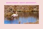 https://photos.revestou.fr/i?/upload/2020/05/08/20200508112642-6e9db2c7-th.jpg